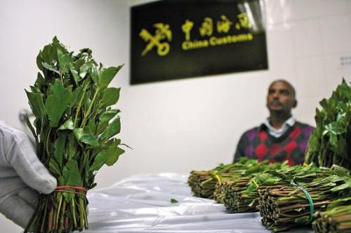 khat arabian tea drug illegal smuggling