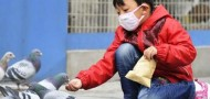 bird flu guangdong avian h7n9