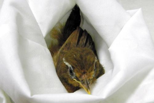 bird smuggle guangzhou airport