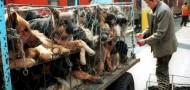 dog eating festival