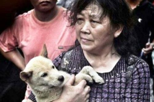 yulin dog eating festival controversy animal activists