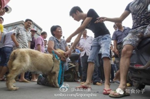 yulin street market dog sellers animal activists