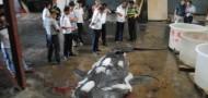 endangered whale shark fujian