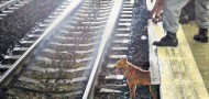 hong kong dog killed MTR subway