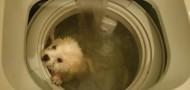 washing machine dog animal abuse hk mainland tensions