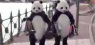 pandas behaving badly chinese tourists
